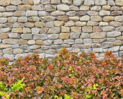 Fototapeta mur z roślin