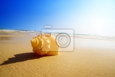 Fototapeta Muszla i ocean piasek