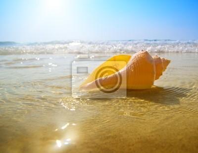 Muszla i ocean piasek