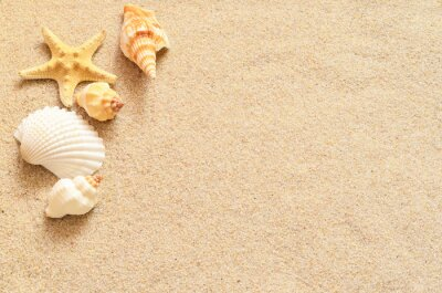 Fototapeta Muszle na piasku