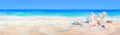 Fototapeta muszle na wybrzeże - tło wakacje na plaży