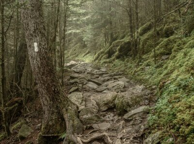 Fototapeta Muted Colors of Mossy Appalachian Trail
