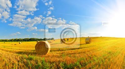 Fototapeta Na farmie