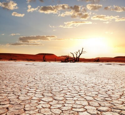 Fototapeta Namib