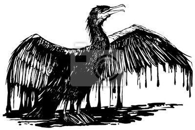 Fototapeta naoliwione kormoran