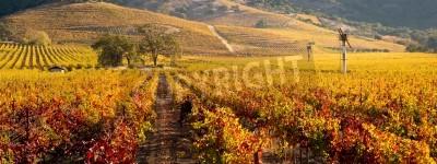 Fototapeta Napa Valley Vineyard in Autumn Panoramic