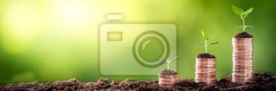 Fototapeta Narastający pieniądze - roślina Na monetach - finanse I inwestyci pojęcie