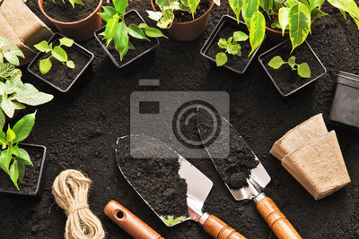 Fototapeta Narzędzia ogrodnicze i rośliny