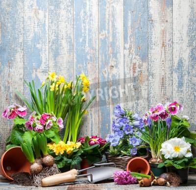 Fototapeta Narzędzia ogrodowe i kwiaty w ogrodzie