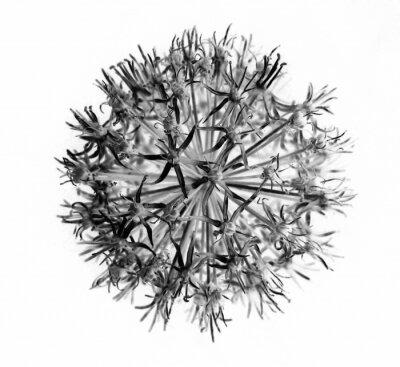 Fototapeta Nasiona roślin streszczenie