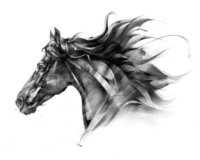 Fototapeta naszkicuj portret boczny profilu konia na białym tle