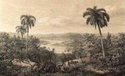 Fototapeta Natura Ameryki Południowej.