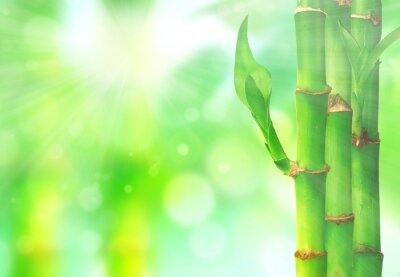 Fototapeta Natural zen backgrounds with bamboo leaves