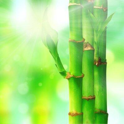 Fototapeta Naturalne zen tła z liści bambusa