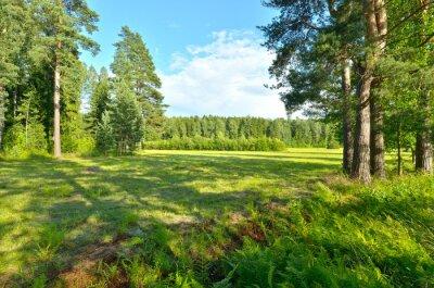 Fototapeta Naturalny krajobraz latem.