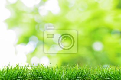 naturalnym zielonym tle z selektywnej focus