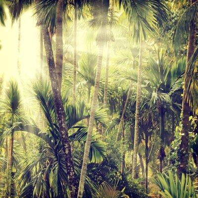 Fototapeta Nature-13
