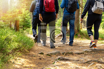 Fototapeta nature adventures - group of friends walking in forest with backpacks
