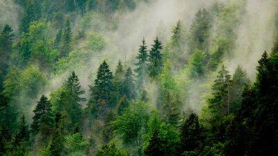 Fototapeta Nebel in den Bäumen am Berghang