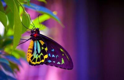 Fototapeta Neon butterfly