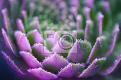 Fototapeta Neon Succulent Macro