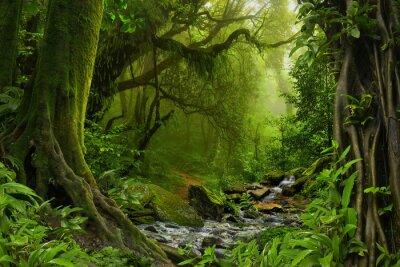 Fototapeta Nepal dżungli z rzeką
