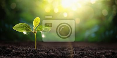 Fototapeta New Life Young Plant in Sunlight. Gardening