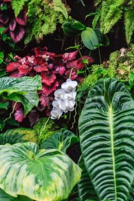Fototapeta Nić dzikich białych orchidei położony między ciężkich liści i roślin