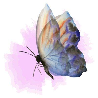 Fototapeta niebieski motyl na różowo