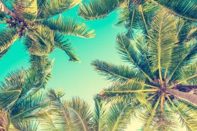 Fototapeta Niebieskiego nieba i drzewek palmowych widok spod spodu, rocznika styl, lata tło