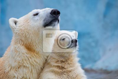 Fototapeta Niedźwiedź polarny z cub