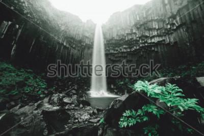 Fototapeta Niesamowity widok na wodospad Svartifoss. Sceniczny wizerunek piękny natura krajobraz. Popularna atrakcja turystyczna. Położenie Park Narodowy Skaftafell, lodowiec Vatnajökull, Islandia, Europa. Piękn
