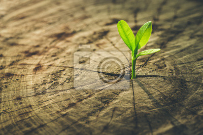 Fototapeta Nowa koncepcja życia z sadzonek rosnących kiełków (drzewa) .business de