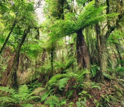 Fototapeta Nowa Zelandia drzewa paproci rodzimych krzewów