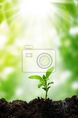 Nowe życie małe drzewa i słońce