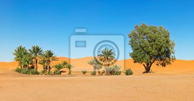 Oaza na pustyni Sahara w Maroku