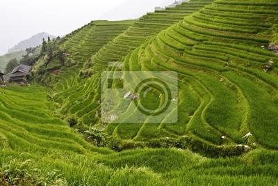 Fototapeta obraz klasycznych asian ryżu dziedzinie tle