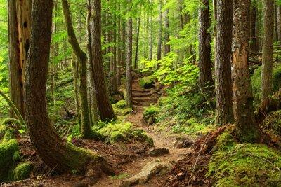 Fototapeta obraz szlaku leśnego północno-zachodniego Pacyfiku
