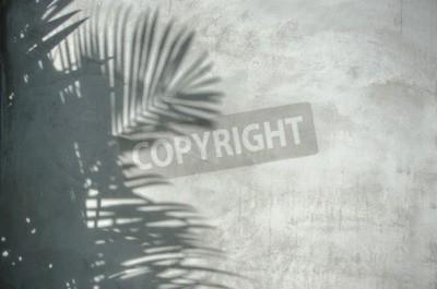 Fototapeta Obraz z liści palmowych cień na ścianie