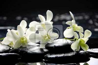 Oddział biała orchidea z kamieni zen