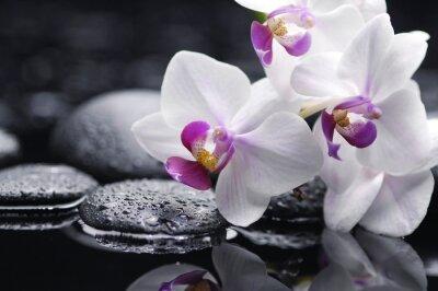 Oddział biały kwiat orchidei i kamień z kropli wody
