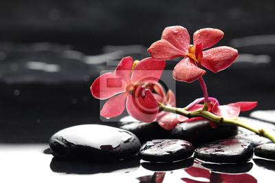 Oddział czerwony kwiat orchidea i czarne kamienie
