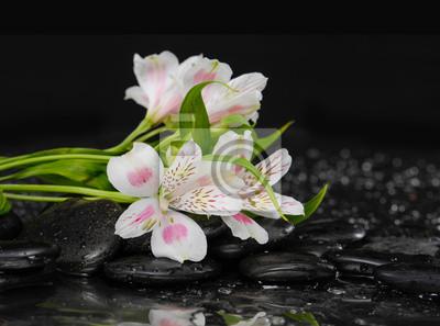 oddział orchidea na czarnym Kamyczki