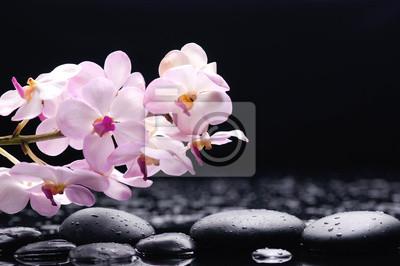 oddział orchidei na odbicie czarnych kamieni
