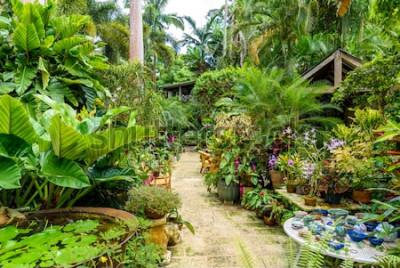 Fototapeta Ogród botaniczny Hunte'a na karaibskiej wyspie Barbados. Jest to rajskie miejsce z białą, piaszczystą plażą i turkusowym morzem.