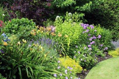 Fototapeta Ogród kwiat łóżko