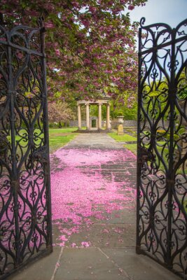 Fototapeta Ogród ścieżki pokryte wiśniowe płatki kwiatu i altana