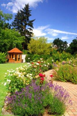 Fototapeta Ogród z różami