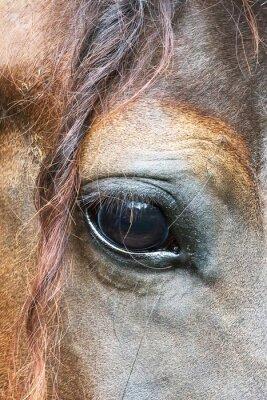 Fototapeta oko konia