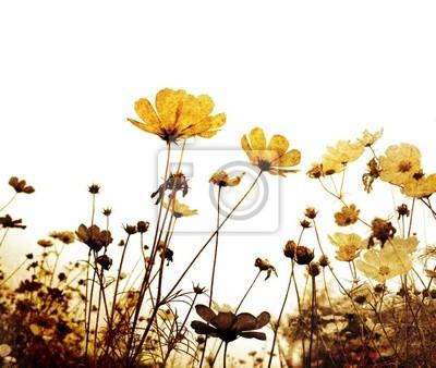 old-fashioned flower - wykonane w Photoshopie z moich oryginałów